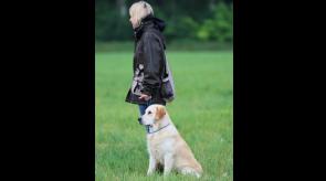 Training mit Buddy